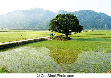 Beautiful gratitude to Korea won clean wood