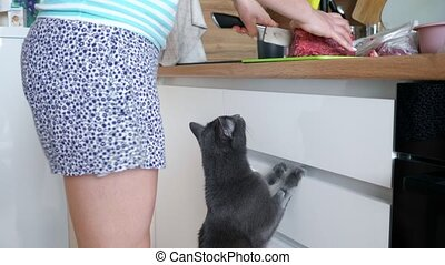 Beautiful gray cat begs meat from the hostess in the kitchen.