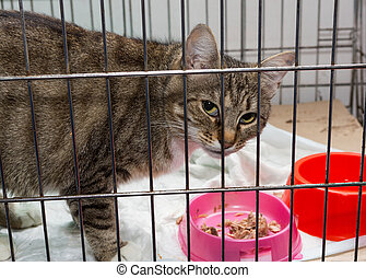 Beautiful gray cat is sad caged shelter