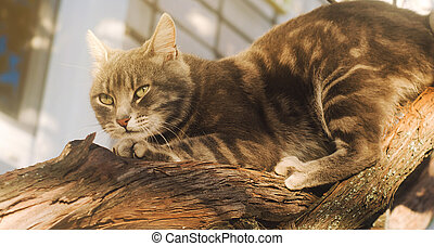Beautiful gray cat on a grape branch on a bright sunny day. Pet. Animal.