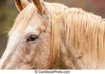 beautiful gray horse portrait