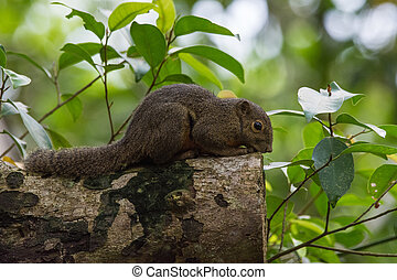 Beautiful gray squirrel sitting on a tree