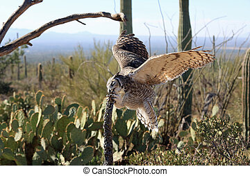 Beautiful great horned owl in the Sonora desert