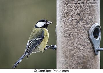 Beautiful Great Tit Parus Major on garden bird feeder