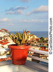 Beautiful Greek terrace with flowers