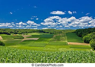 Beautiful green agricultural landscape in Croatia, corn and...