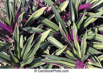 Beautiful Green and Purple Plan