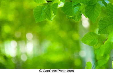 Beautiful green background with fresh leaves.