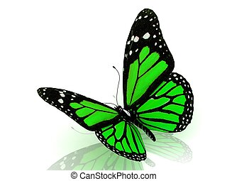 Beautiful green butterfly Isolated on white background. 3D...