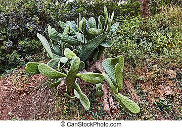 Beautiful green cactus on a mountainside