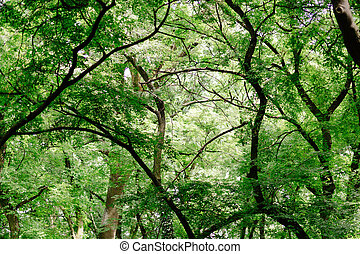 Beautiful green forest at spring