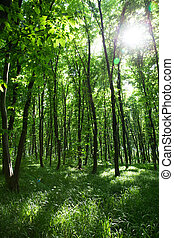 forest - beautiful green forest
