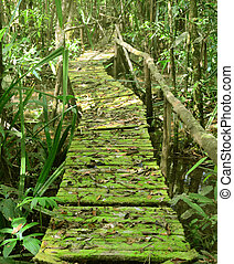 Beautiful green forest with boardwalk