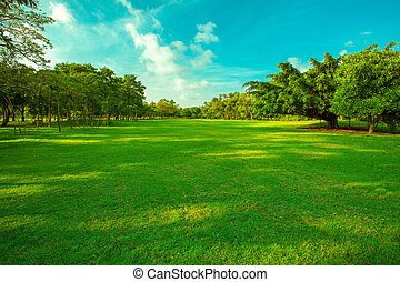 beautiful green grass field and fresh plant in vibrant meadow against white cloud on blue sky use as natural summer season background, backdrop