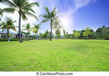 beautiful green grass field in public park against vibrant blue