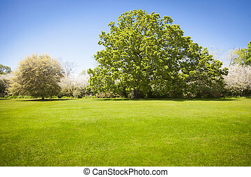Beautiful Green Grass Field with Blossoming Trees
