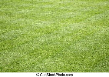 Beautiful green grass lawn care