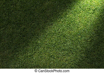 Beautiful green grass texture with sun beam