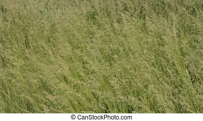 Natural meadow herb field background. - Beautiful green...