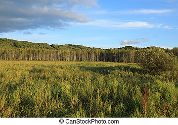 beautiful green grassland and mountains under blue sky