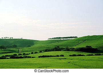 beautiful green grassland in africa