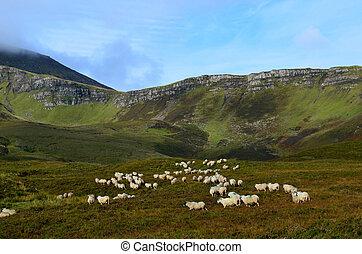 Beautiful green highlands in the Isle of Skye