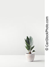 beautiful green home plant growing in decorative pot on white