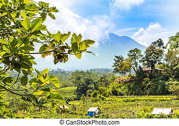 Beautiful green landscape of mount volcano Agung on Bali...