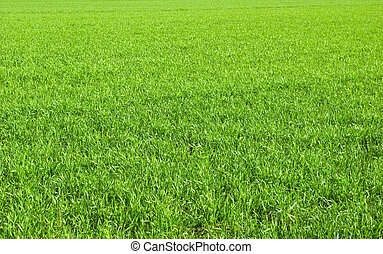 green lawn - Beautiful green lawn freshly mowed