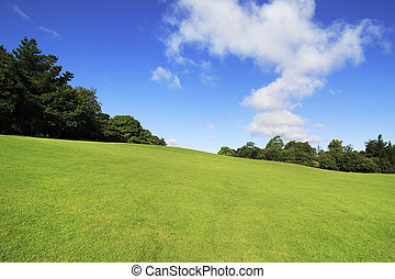 Beautiful green lawn in summer park.