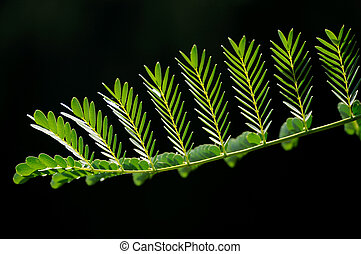 Beautiful green leaf pattern with black background.