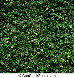 Beautiful Green leaf wall and background