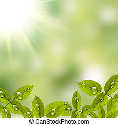 Beautiful green leafs with drops of water