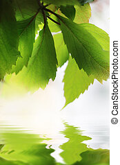 Beautiful green leaves close-up