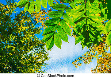 Beautiful green leaves in autumn background