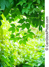 green leaves in bright sunlight