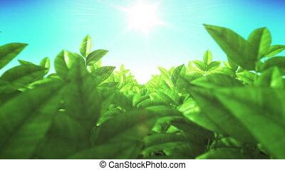 Beautiful Green Lush Leaves