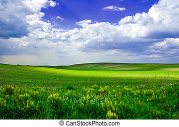 Beautiful green meadow