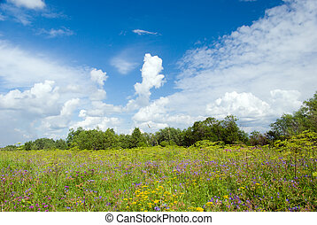 Beautiful Green Meadow with white cloud