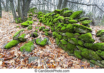 Beautiful green moss covers a wall of a meadow.Abstract background of moss.