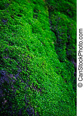 Beautiful Green Moss In The Forest