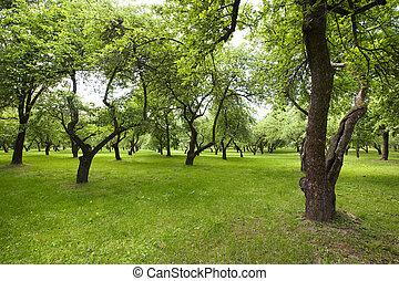 Beautiful green park.