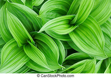 Beautiful green plant close up
