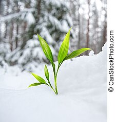 Beautiful green plant in the winter forest