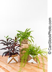 Beautiful green plants in a room with white wall