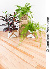 Beautiful green plants in a room with wooden floor