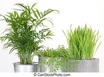 Beautiful green plants in pots