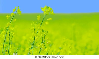 Beautiful green plants