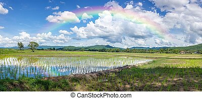 Beautiful Green Rice Field, Blue Sky, White clouds And Rainbow In The Mountain Background.