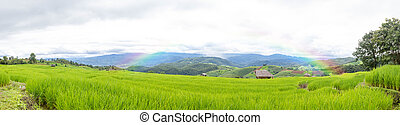 Beautiful Green Rice Field With Blue Sky And Rainbow In The Mountain Background.